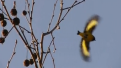"Reserva Ecológica Costanera Sur – ""Aves Silvestres"""
