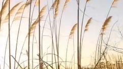 "Reserva Ecológica Costanera Sur – ""Plantas Silvestres"""